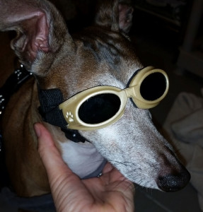 We supply goggles for your pet during laser therapy