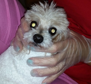 We carefully wrap your dog up in a towel before cleaning their teeth so they lie nice and still